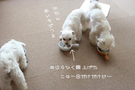 3_29_6261.jpg