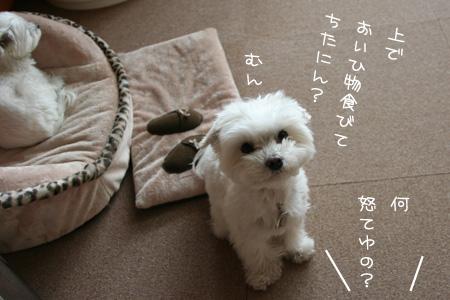3_31_6380.jpg