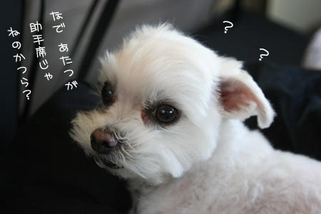 4_11_8551.jpg