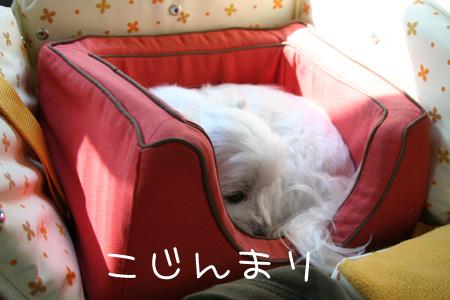 4_11_8600.jpg