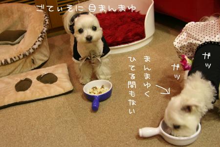 4_17_0028.jpg