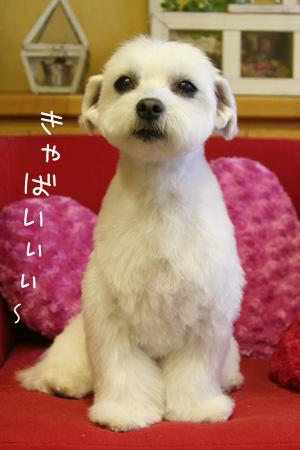 4_19_0250.jpg