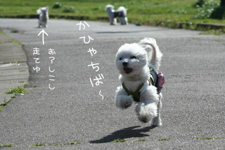4_1_6533.jpg
