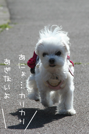4_1_6546.jpg