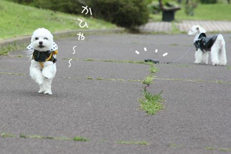4_20_0278.jpg
