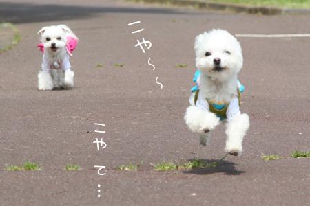 4_21_0445.jpg