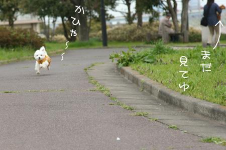 4_2_6706.jpg