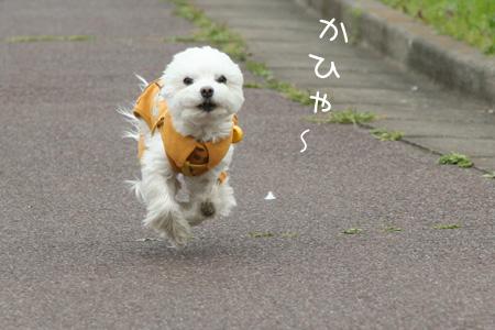 4_2_6710.jpg