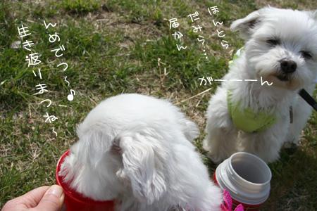 4_4_7319.jpg