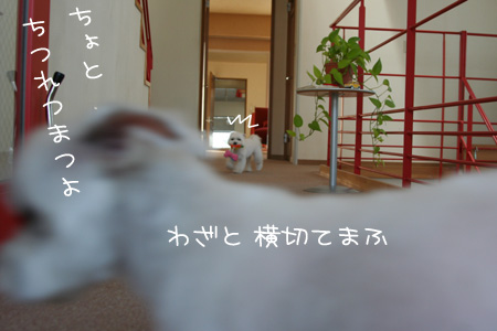 4_5_7536.jpg