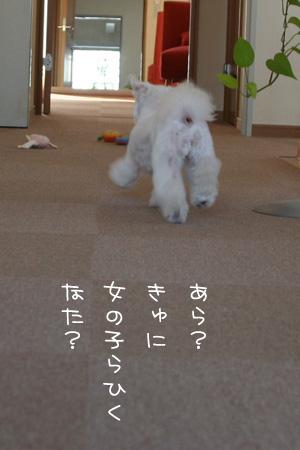 4_5_7672.jpg