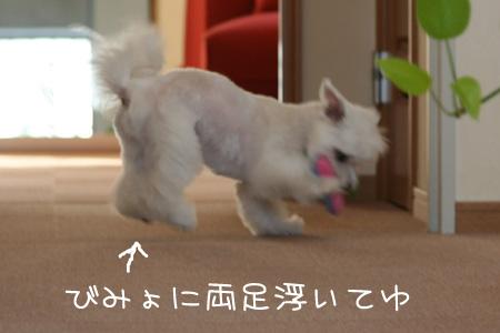 4_5_7713.jpg