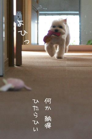 4_5_7729.jpg