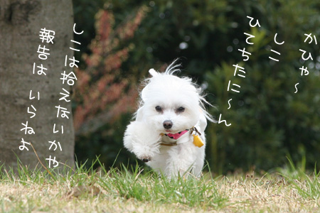 4_7_8194.jpg