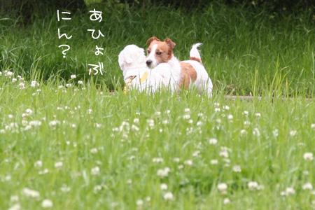 5_11_3912.jpg