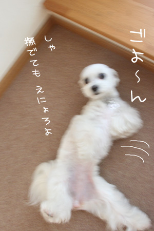 5_27_6096.jpg