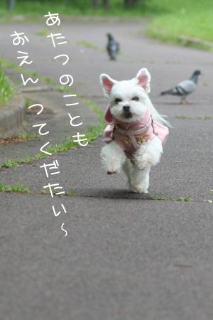 5_4_2443.jpg