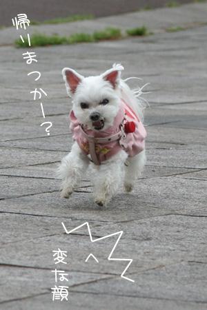 5_4_2454.jpg