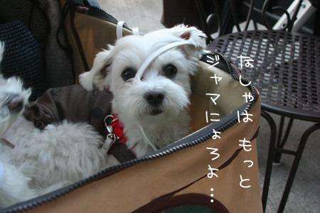 6_10_8069.jpg