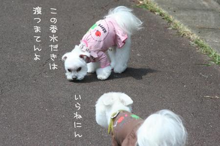 6_16_8753.jpg