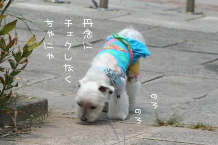 6_17_8885.jpg