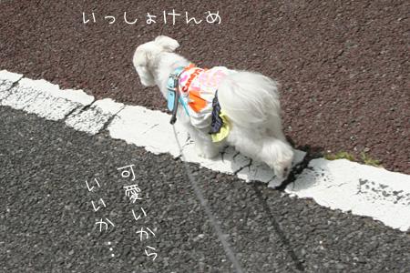 7_1-_0305.jpg