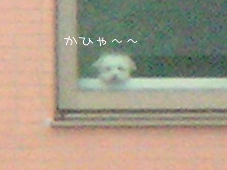 7_14_4275_2.jpg