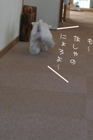 7_31_3632.jpg
