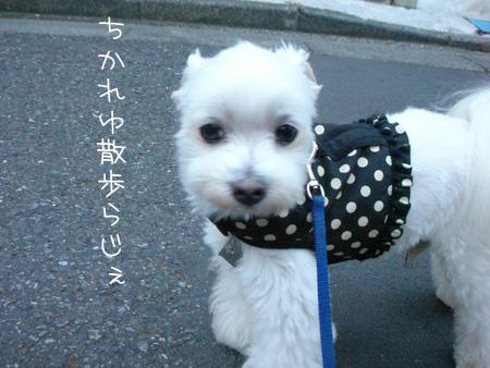 7_5_4122.jpg