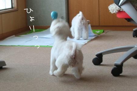 8_11_4550.jpg