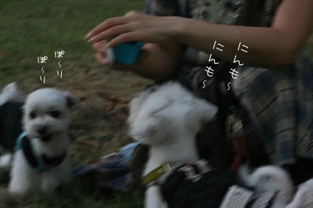 8_11_4782.jpg