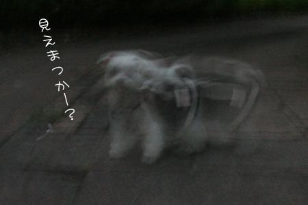 8_11_4799.jpg