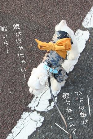 8_1_3776.jpg