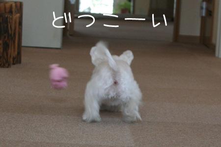 8_2_3883.jpg