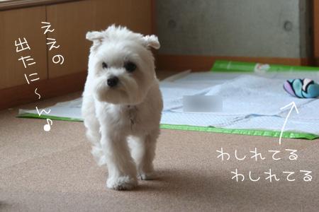8_4_4027.jpg