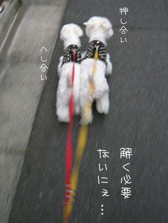 8_6_4812.jpg