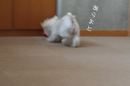 8_8_4303.jpg