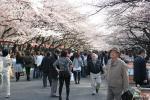 2008上野桜_3