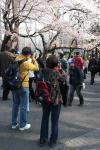 2008上野桜_4