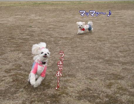 20080326_6.jpg