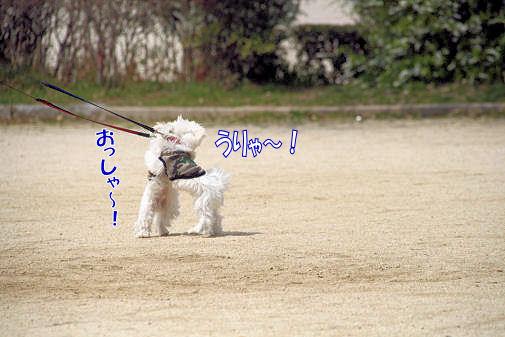 20080402_011.jpg