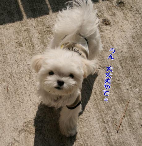 20080514_006.jpg