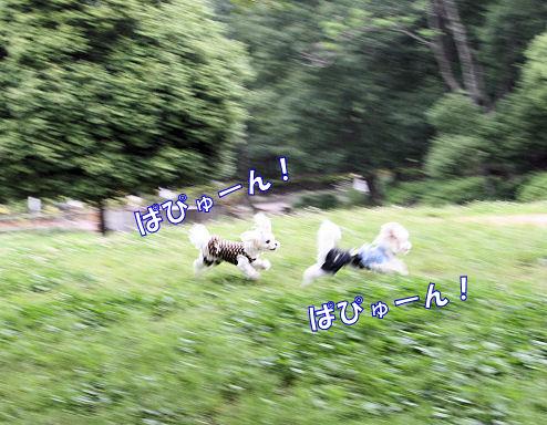 20080608_0278.jpg