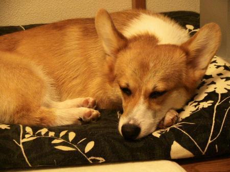 クッションの枕