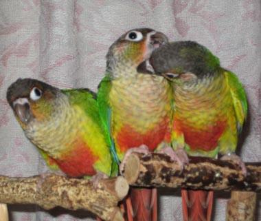 三羽姉妹2