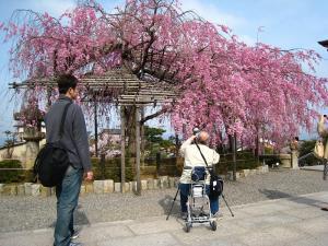 清水寺、春・花見8、撮彩先生