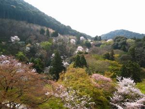 清水寺、春・花見4