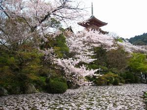 清水寺、春・花見7