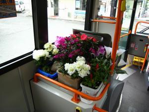 花バス、木原さんのお花