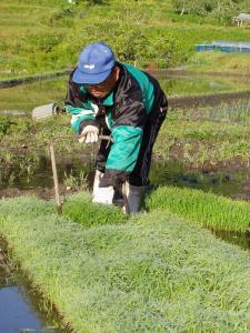 2008妹尾、田植え2